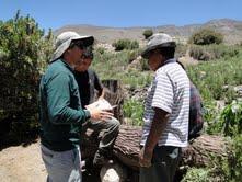 SAG inicia estudio poblacional del puma en la región de Tarapacá