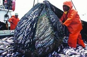 Dirigentes denuncian despido de dos mil trabajadores por la Ley de Pesca