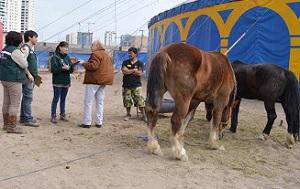 La preocupación por el bienestar animal en circo Fuentes Gasca