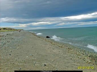 Municipio de Iquique: «Estamos distribuyendo periódicamente el agua potable en caletas del borde costero