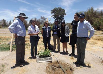 Universidad Arturo Prat difunde avances en el proceso de producción del Vino del Desierto
