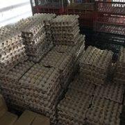 Reiteran alerta: Más de 27 mil huevos ingresan ilegalmente a la Región este año