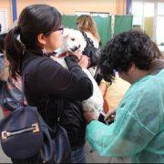 Operativo gratuito en Pozo Almonte y La Tirana para esterilizar mascotas