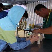 FOSIS lleva a El Colorado programa para el control y prevención de la población canina y felina