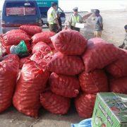 Alertan sobre decomiso de 10 toneladas de limones internados al país y que venderían como producto local