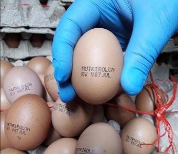 Advierten sobre internación clandestina y venta de huevos con rótulo «Nutrilón, provenientes de Bolivia