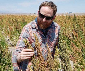 Productores e investigadores de Chile y el mundo conocen cultivos de quinua en pampa y altiplano de Tarapacá